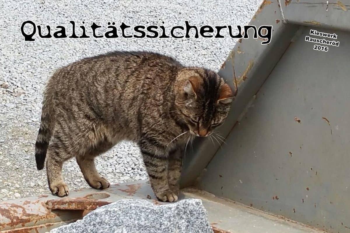 Mauer U-bach16_06
